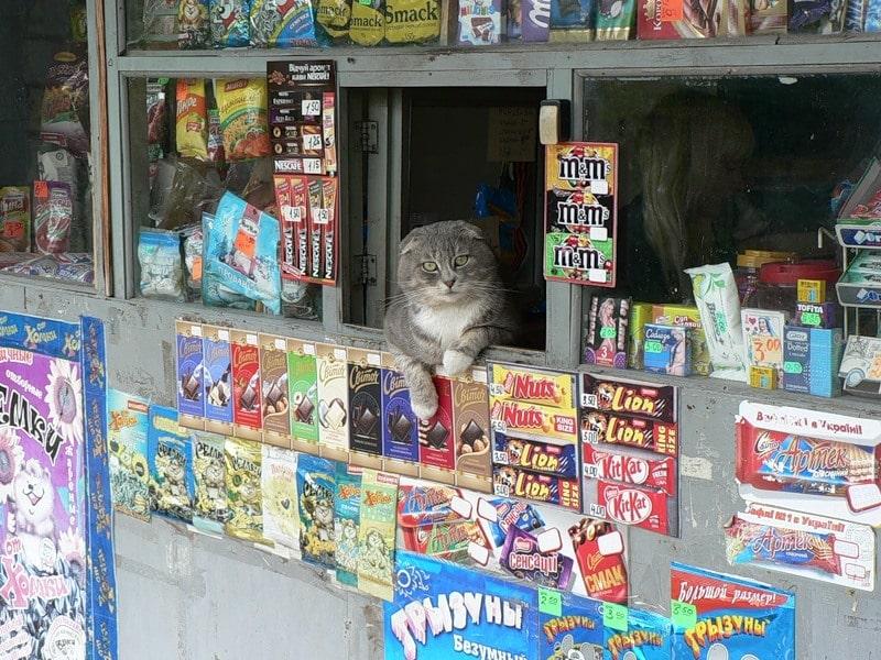 Просто не верится, что здесь можно увидеть кота (22 фото)