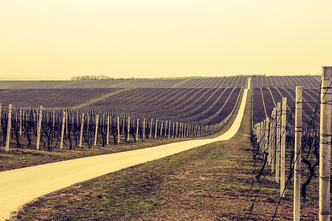 Виноделие Хорватии