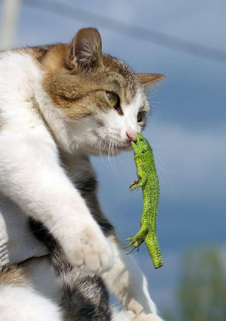 кот «Верни хвост!»