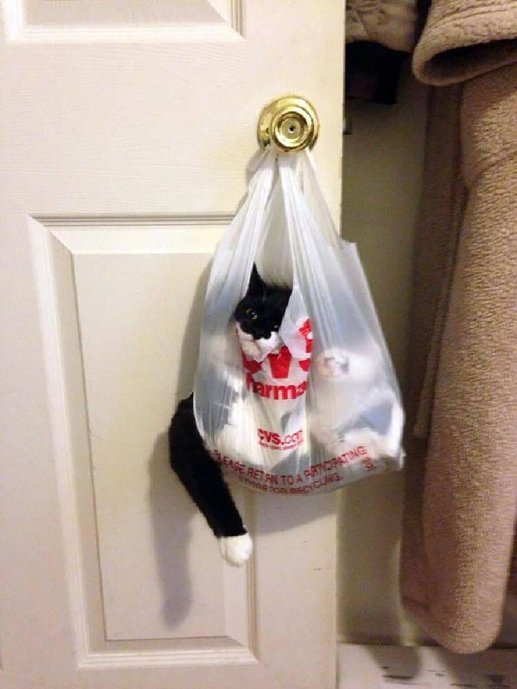 «Кажется план побега из дома трещит по швам» кот в кульке