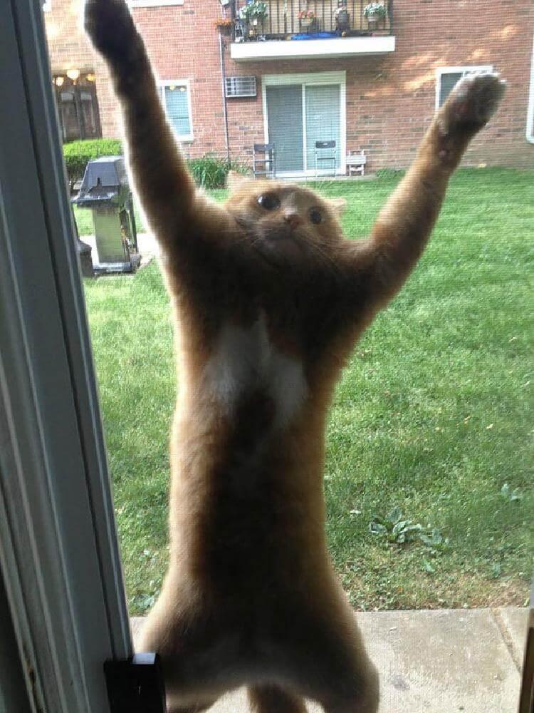 «Они уже здесь, впусти меня!» кот