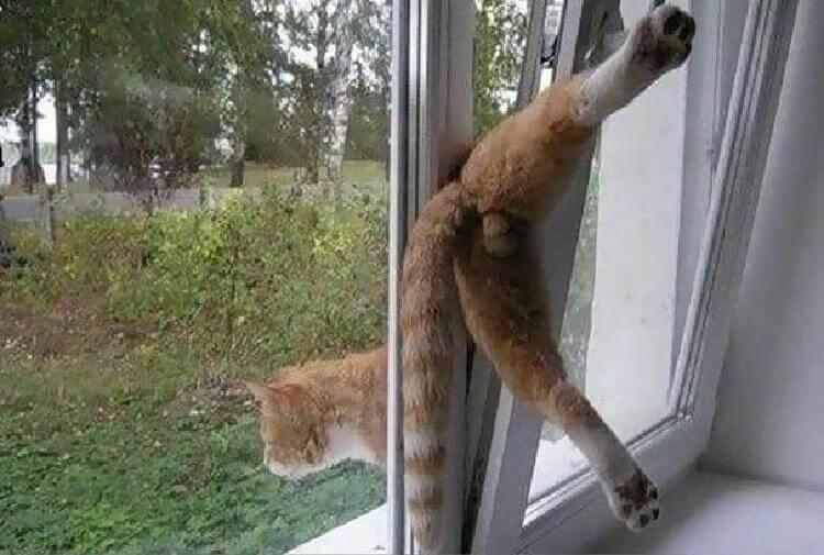 кот «Как-то неловко получилось»