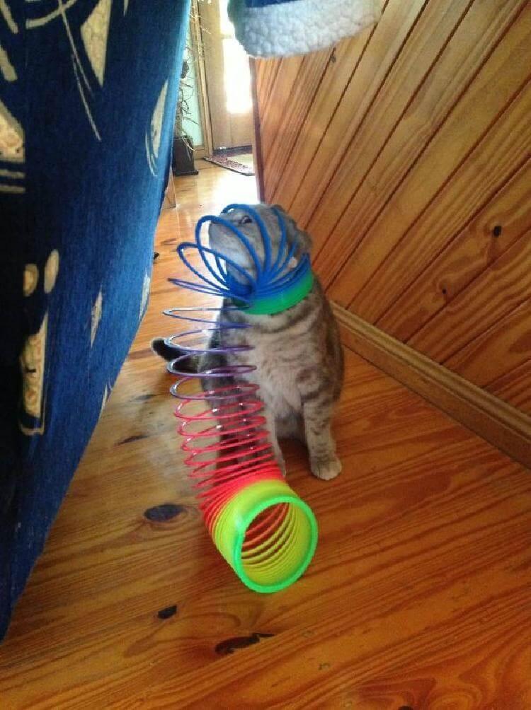 кот Все любят радугу