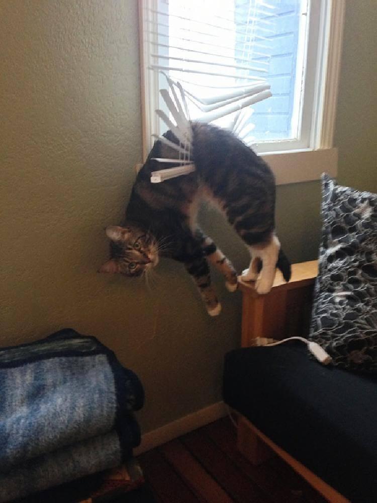 кот «Эти жалюзи давно за мной охотились»