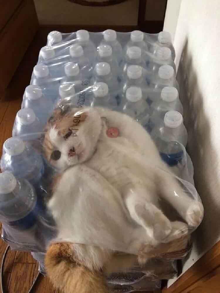 кот «Ничего не знаю, мне удобно»