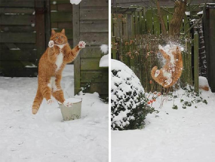 кот «Ловлю!»