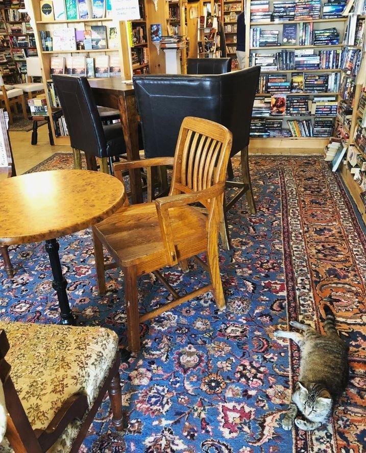 Котята бродят по книжному магазину в Канаде, и клиенты даже могут их забрать к себе