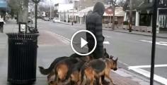Кажется, будто он просто выгуливает собак. Но присмотревшись, вы будете поражены!