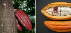 Вот как выглядят 15 популярных продуктов до сбора урожая. С ума сойти, ты даже не догадывался!