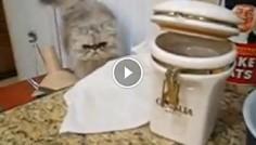 Кот ворует печеньки из банки и делит добычу с собакой.