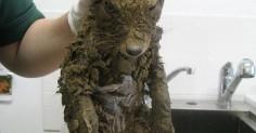 Работники стройки нашли непонятного зверя в яме с грязью. Только отмыв его, люди поняли, кто это был.