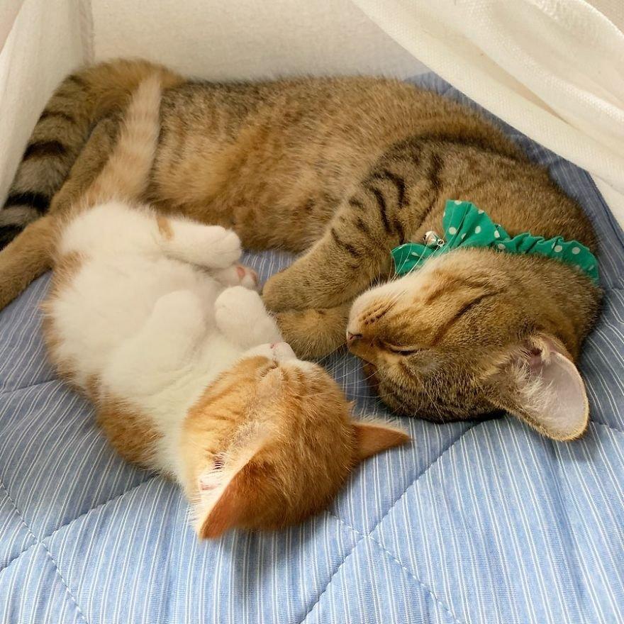 следуя фото с спящими котятами услуга поможет вам
