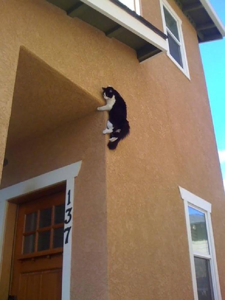 Котокамера наружного наблюдения