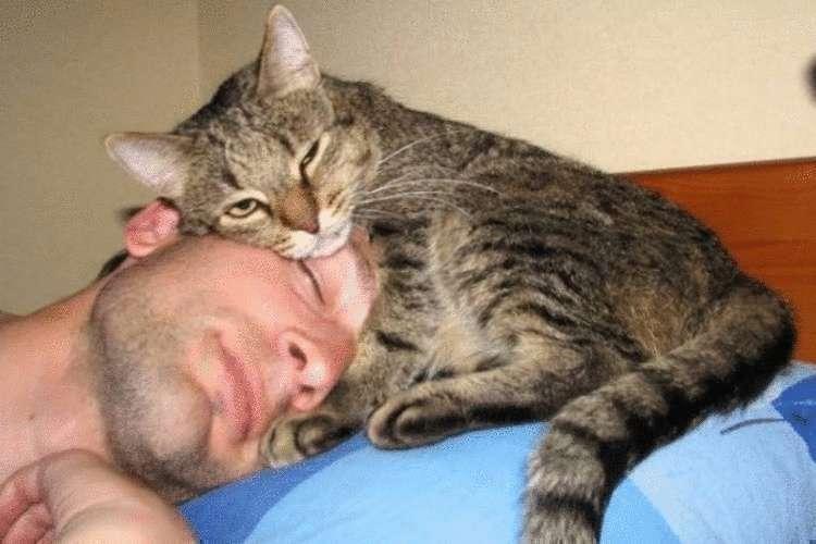 вот, мой лучший друг спать картинки это наиболее