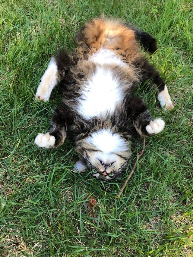 20 крайне странных котиков, которые хоть и выглядят милыми, но всё равно словно с другой планеты